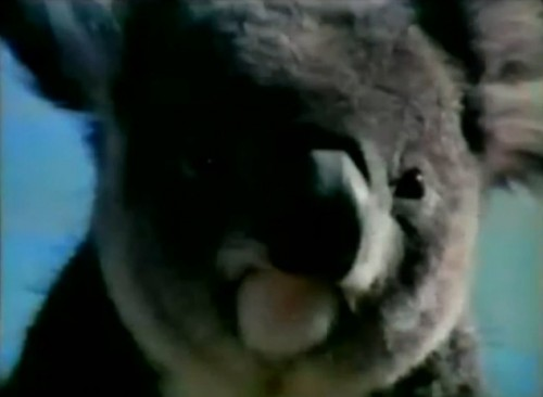 This koala is not a fan of Qantas. (Qantas Airlines commercial, 1972)