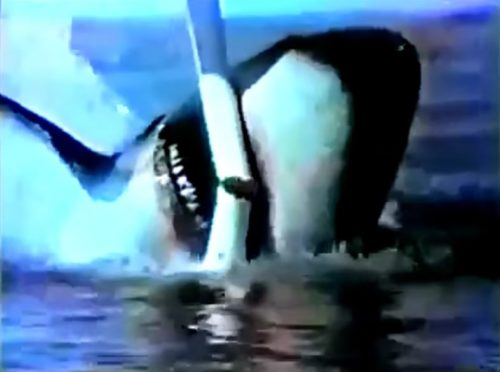 Don't say 'beer,' say 'shark'! (Colt 45 commercial, 1976)