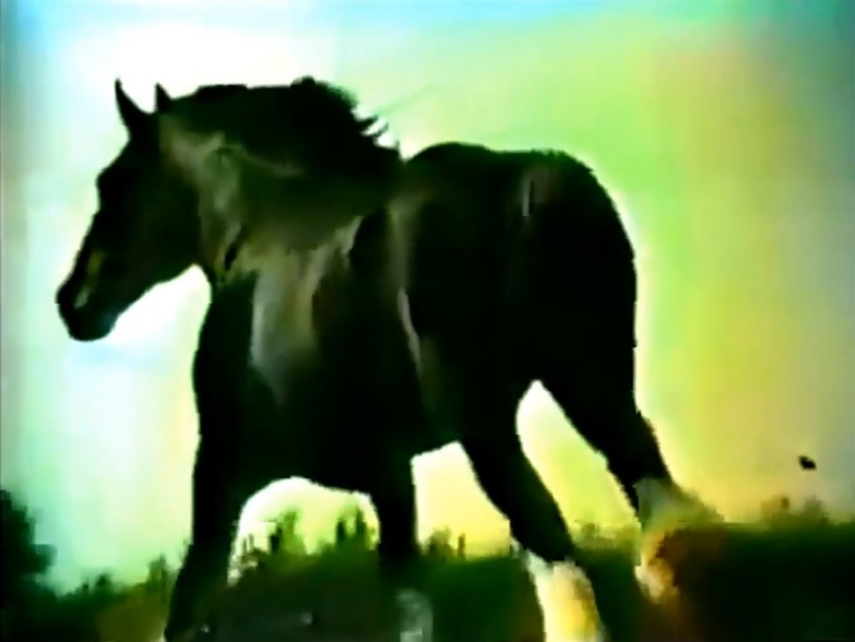 70s spots budweiser champion clydesdales 1976 bionic disco the equine majesty of bud aloadofball Gallery